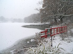 Danger.... (CVerwaal) Tags: nyc newyorkcity winter lake snow newyork ice danger lumix centralpark ducks thelake thinice lumixlx3