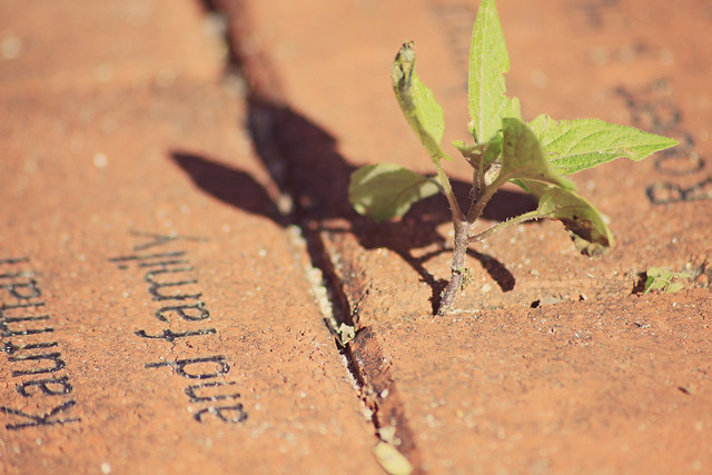 brick paver plant