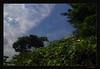 Compare and Contrast _ The Nature  [ মানুষ কি মানুষের জন্য ]-4 (HamimCHOWDHURY  [Read my profile before you fol) Tags: life red portrait sky blackandwhite cloud white black tree green nature canon eos focus colorful faces blu sony tripod surreal excellent dhaka vaio rgb bangladesh lightandshadow dlsr cameramobile 60d backabdwhite 595036 framebangladesh digombor rajsurath