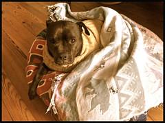 winter friends cold pie rainyday dayforpoems takingcareofsomeoneisfun sweatersandblanketsondogs