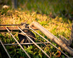 not going anywhere soon... (Lois_WA) Tags: abandoned grass nikon wheels explore d90 onwheels shopingcart sigma105mmf28exdgmacro ourdailychallenge riesepix