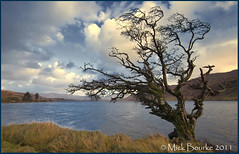 Lough Inagh wind swept tree Connemara Galway Ireland. (Mick Bourke.) Tags: ireland sky tree galway water clouds lough connemara windswept canon500d sigma1020 loughinagh