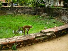 Летящая обезьяна