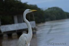 BRdiegues_Mogi (Brdiegues-) Tags: rio river ponte fisheye egret brigde gara canom portoferreria