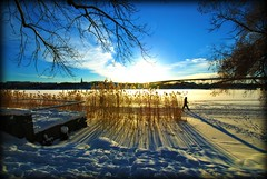 Winter with the sun very low during daytime (Staffan_R) Tags: bridge blue trees winter light sky sun snow tree ice clouds reeds is vinter shadows sweden stockholm january bro sn kungsholmen skugga vsterbron moln norrmlarstrand vass
