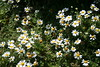 GCCA flora 2 (Solimar International) Tags: community conservation guassa areaethiopia