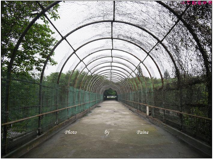 大溪埔頂公園 (12).JPG