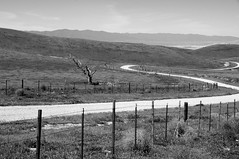 """Somewhere out on that horizon, faraway from the neon sky..."" (nedlugr) Tags: california ca bittercreeknationalwildliferefuge hudsonranchroad dirtroad fence tree deadtree lonetree horizon tumbleweeds blackandwhite bw barbedwire theeagles mountains desert hills dry drought inthecity omot"