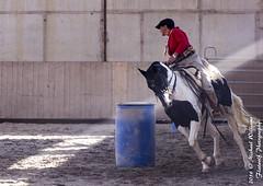 Criollo Fiesta-160910-0495 (Cowgirl-Babe) Tags: crzvd criollo criollofiesta flatwolfphotography photographermichaelwilliams neudeck badenwurtenburg germany