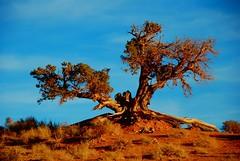 Tree of wisdom (mathotspot) Tags: arizona usa mountain nature rock stone landscape utah us ut butte unitedstates az spire threesisters wilderness navajo monumentvalley monolith mesa naturepark buttes navajotribalpark navajoindianreservation valleyoftherocks tsbiindzisgaii raingodmesa mathotspotphotography