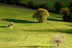 teneri velluti (acciderbolina) Tags: autumn light shadow rain ombra hills urbino autunno pioggia luce marche colline raggi temporale
