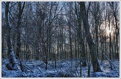 HDR forest (TommyDPhotography) Tags: bridge trees winter light sun snow ice forest canon licht frozen bomen bevroren sneeuw nederland brug groningen bos zon ijs roegebos