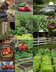 Edible Garden Collage (Chiot's Run) Tags: collage edible ediblegarden growyourown