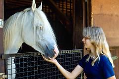 White & Blond (nbcmeissner) Tags: horses horse white germany deutschland blond arabianhorse ektachrome nikonfe stallion 80200mm borstel niedersachsen lowersaxony arabianhorses ektachrome400 arabhorse arabianstallion gestt arabianstud arabergestt vollblutarabergestt nikkor80200mmf45lens gesttdmken