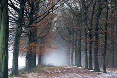 winter fog (Johan_Leiden) Tags: winter mist netherlands dutch fog forest path wouw wouwseplantage