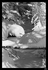 memories of last winter (dK.i photography) Tags: blackandwhite bw snow ice canon rebel frozen maryland february blizzard 2010 ef100400mmf4556lisusm dki t1i