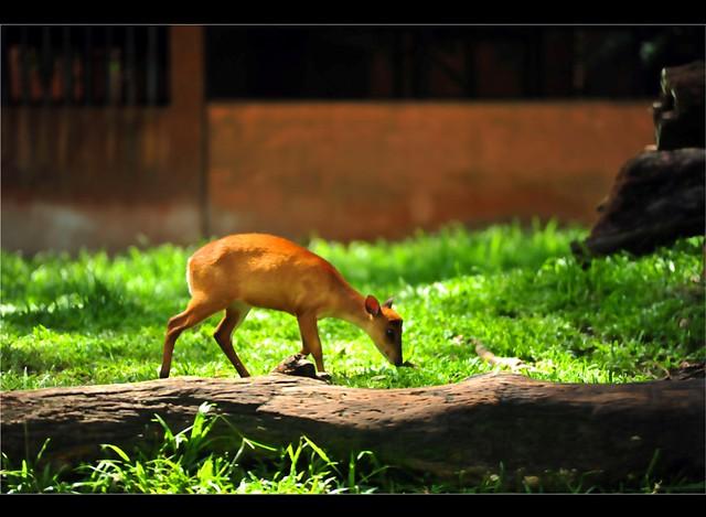 Zoo Taiping 18