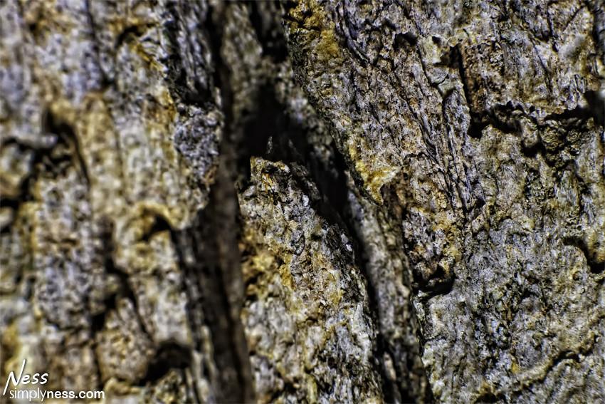 treebark2