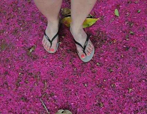 Chão rosa