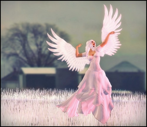 Angel_001