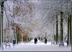 Winter in Wilrijk (jackfre2) Tags: park trees winter sky people white snow forest belgium path branches benches forestpath wilrijk nachtegalenpark platinumheartaward mygearandmepremium mygearandmebronze