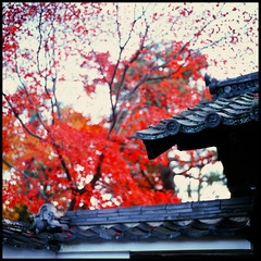 paint it with red (henrie) Tags: street trip roof red color film japan zeiss t maple kyoto natural availablelight top taiwan snap hasselblad velvia fujifilm 50 fujichrome uji cf planar byodoin 500cm henrie carlzeiss rvp50 8028  planart2880  kyototrip2010