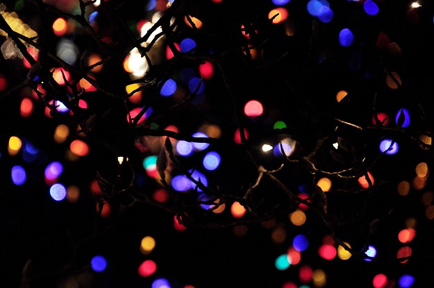 lights behind tree