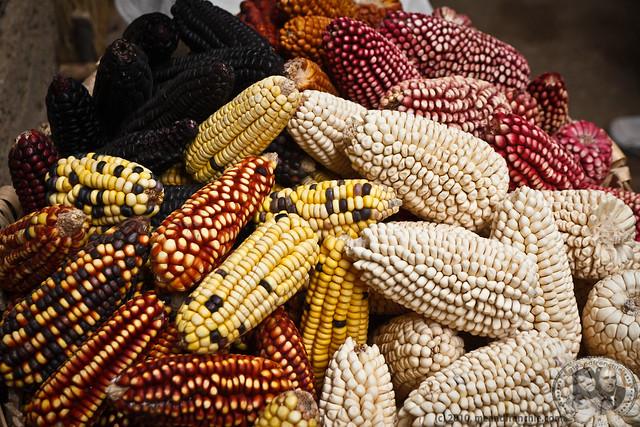 Corn of Colca Valley