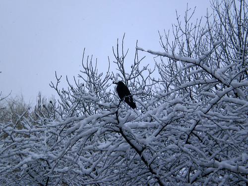 Зима в нашем городе 5293603385_c703188948