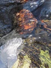 IMG_6668 (Ellen Bulger) Tags: ice woods connecticut geology woodbridge wepawaugriver