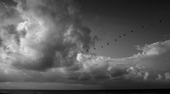 Despues de navidad - 1 (Uriel Akira) Tags: sky beach pelicans birds clouds mexico flock playa aves cielo nubes parvada veracruz coatzacoalcos pelicanos