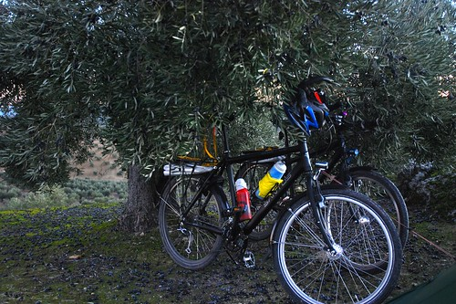 Bikes Under An Olive Tree