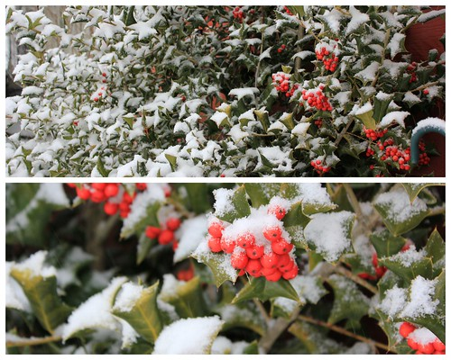 Snow & Holly. by Ahlexandria