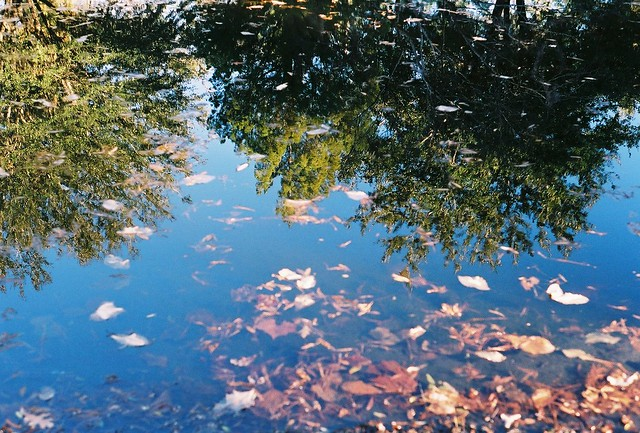 tree reflection, leaves on water