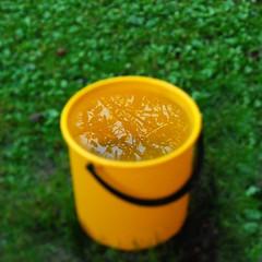 Bucket full of summer