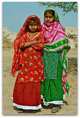 colours of desert rohi, PAKISTAN (TARIQ HAMEED SULEMANI) Tags: flowers pakistan colors lumix panasonic tariq cholistan rohi derawarfort concordians sulemani