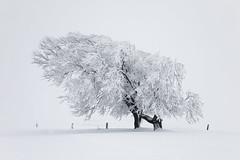 A long time ago (Mace2000) Tags: schnee trees winter snow nature germany landscape natur 5d landschaft schwarzwald blackforest schauinsland sdschwarzwald mace2000 windbuche 20081217mg2885