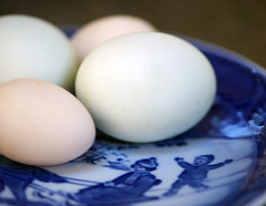 eggs (cmacphotography) Tags: macro chickens bokeh eggs marincounty newyearsday 2011 backyardchickens d3s onephotoweeklycontest onephotoweeklycontestwinner