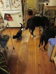 H.P. and the dogs are getting used to each other