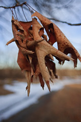 Shimmering Stubborn Remnants (Boneil Photography) Tags: canon ma eos cemetary sigma haverhill 20mmf18 40d boneilphotography brendanoneil fwo2018