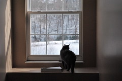 (_kfphoto) Tags: snow cold window look wonder book knoxville tennessee kitty curious emotional