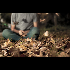 142/365 Passive (brandonhuang) Tags: blur leave leaves person fly leaf dof bokeh flash sit twig twigs strobe strobist brandonhuang