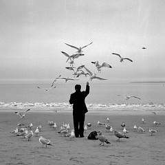 coney island bird man (Barry Yanowitz) Tags: ocean nyc newyorkcity blackandwhite bw seagulls ny newyork bird 6x6 film beach birds animal animals brooklyn mediumformat coneyisland blackwhite sand gu