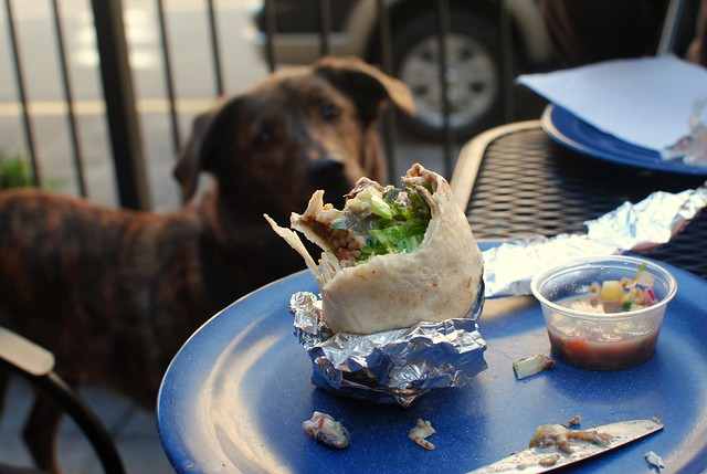 a half-eaten burrito & a hungry pup