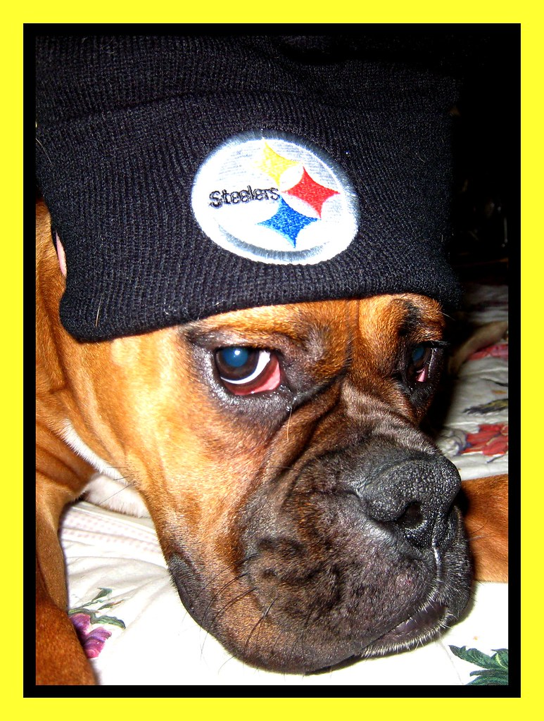 Yeah, I said it before and saying it again...STEELERS RULE!!!