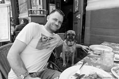 Matre Chien 2014 - 157 - Ruben & Alex - 6 ans Coker Espagnole Pug AC (PicAxis) Tags: new york city dog chien project photos master ville matre projet