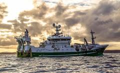 Antarctic II LK145 (Ivan Reid) Tags: pelagic whalsay shetland sea maly mackerel trawler trawling trawl tanks trip towing trawldoors antarctic pump pumping sunset autumn fish fisherman fishing fishermen calm season 2014 eastshetland inshore canon70d