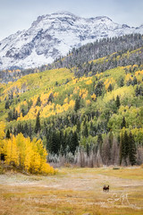 Caballero (Explored) (Travis Klingler (SivArt)) Tags: colorado danballard mountain fallcolors