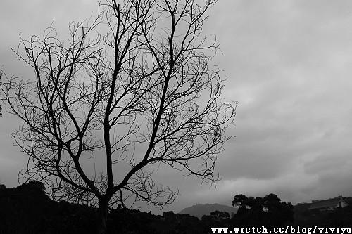 _MG_6256.jpg