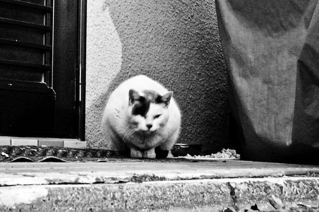 Today's Cat@2011-01-27